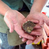 ako Oysters Are Grown: A Visit to Island Creek Oysters in Duxsbury, Massachusetts